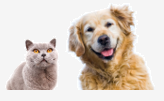 Odpuzovače koček a psů