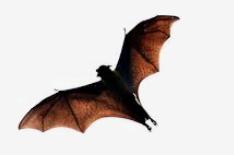 Na netopýry