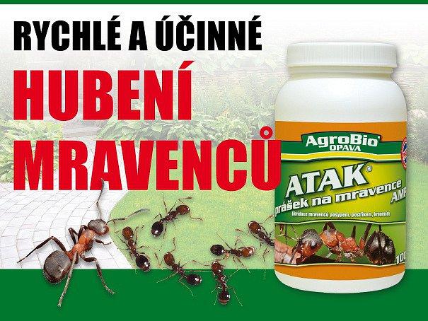 Prášek na rychlé hubení mravenců.